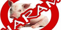 Babi sudah digunakan dimana-mana